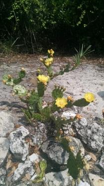 yellow cactus